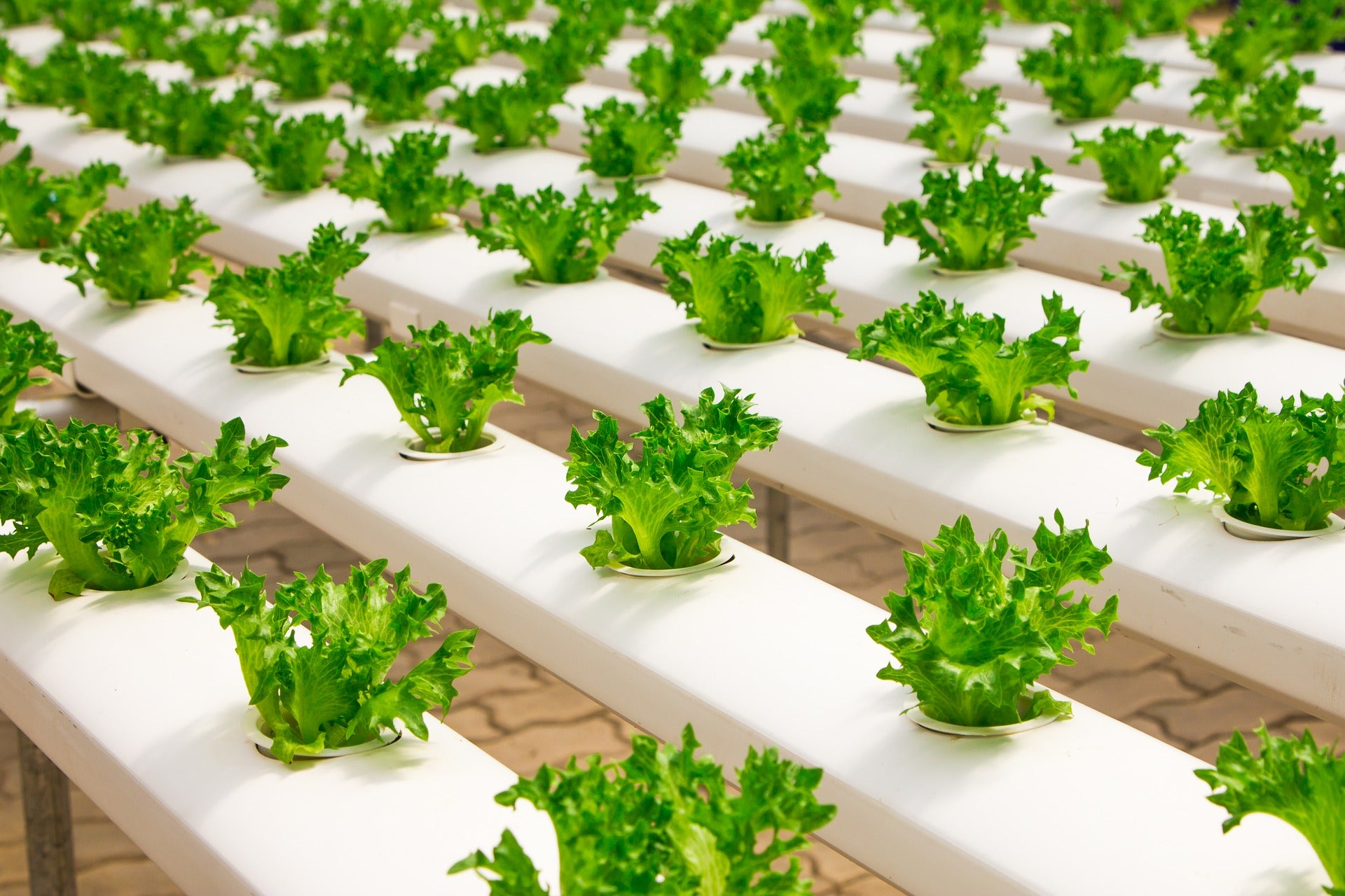 What Is The Future of Food and Nutrition?